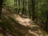 hiking-trail-in-harriman