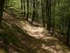 hiking-trail-in-harriman