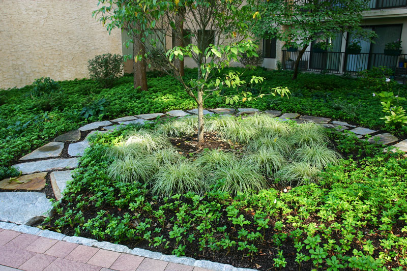 landscaped-gardens-along-front-walkway